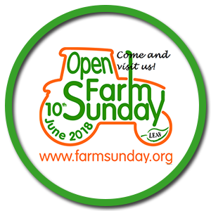 Open Day Sunday
